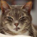 Firenze – Gatto torna alla sua casa dopo 1 anno e mezzo e dopo un viaggio di 140 chilometri