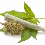 Cavriglia- Una serra fiorente…si, ma di marijuana
